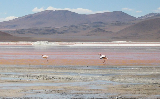 Tour no Deserto – Laguna Colorada