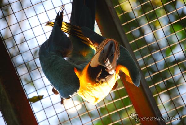 Arara no Viveiro do Parque das Aves em Foz do Iguaçu Parque das Aves em Foz do Iguaçu: quando pássaros voando valem mais do que na mão