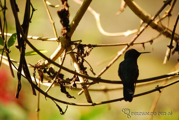 Beija flor no Parque das Aves Foz do Iguaçu Parque das Aves em Foz do Iguaçu: quando pássaros voando valem mais do que na mão
