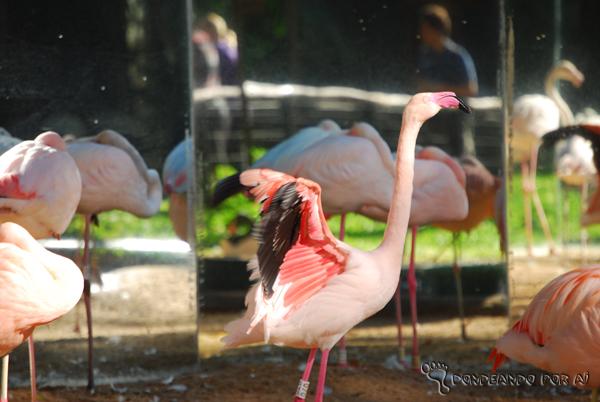 Flamingo e seus espelhos no Parque das Aves em Foz do Iguaçu Parque das Aves em Foz do Iguaçu: quando pássaros voando valem mais do que na mão