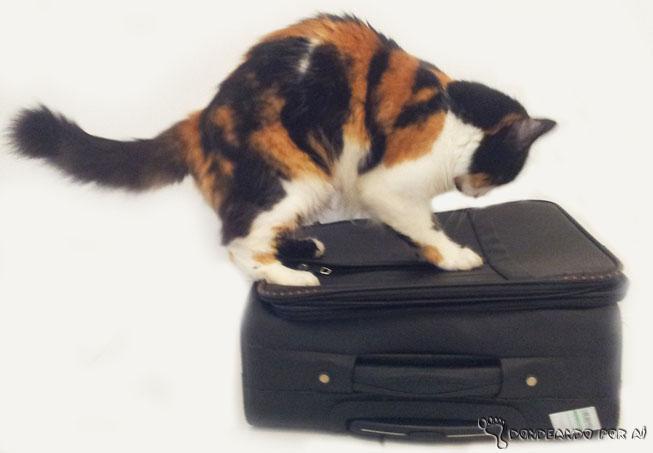 Tem mais gente querendo arrombar sua mala