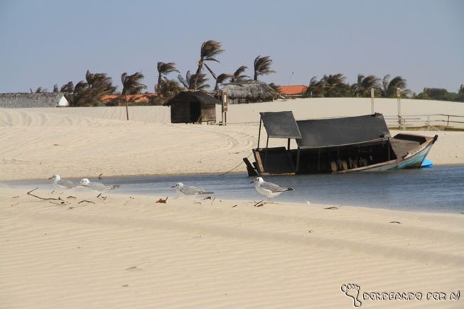 Gaivotas e barco Naufragado Maranhão