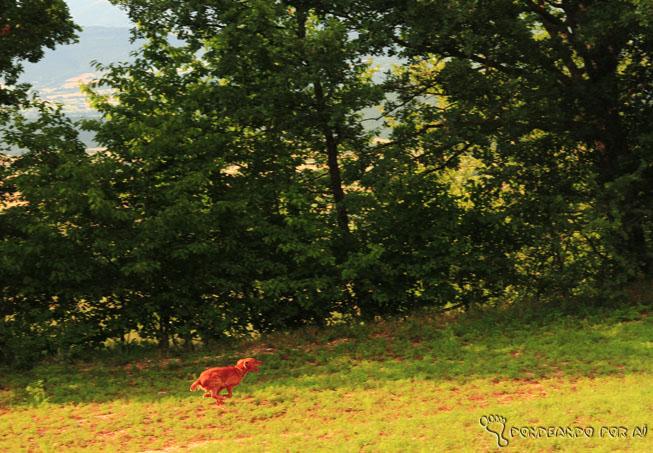 Cão solto nos campos