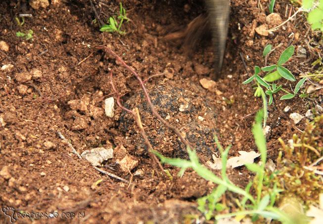 Desenterrando uma trufa