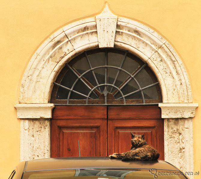 Gatos e portas em Perugia