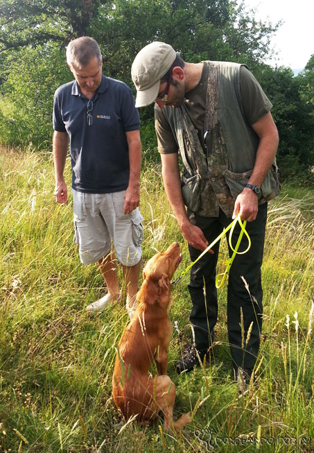 Treinando os cães antes da caça às trufas