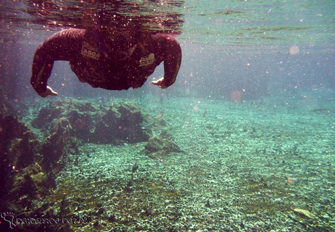 Flutuação Rio da Prata