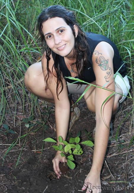 plantando a muda