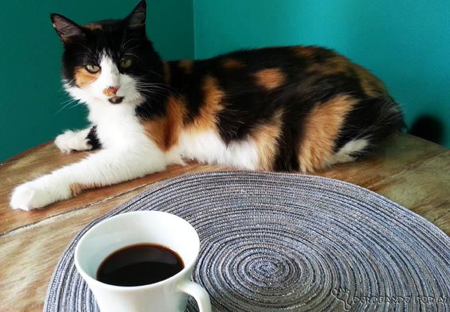 cafe com gatos 2