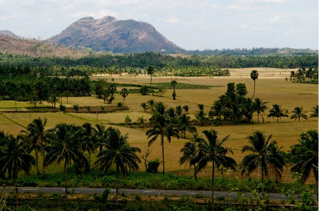 Foto dos campos de Kerala, Índia. Crédito da Foto: departamento de mídia da Kerala Tourism.