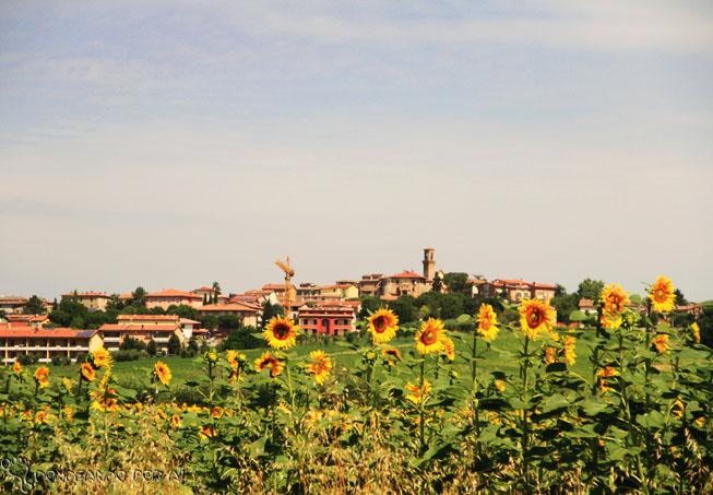 Campos de Girassol de Perugia