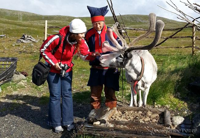 eu e uma rena na lapônia