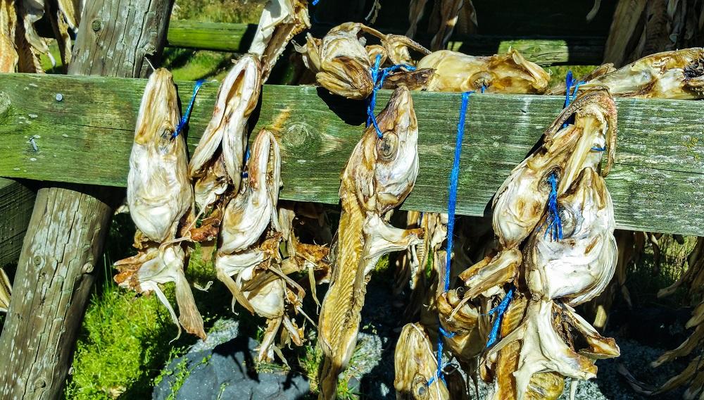 Cabeças de bacalhau secando na Islândia. Bonito, bonito, não é... :P